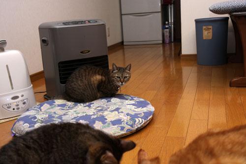 猫草、みんなの反応は_d0355333_19120683.jpg