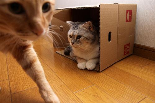 箱の有効利用_d0355333_19122704.jpg