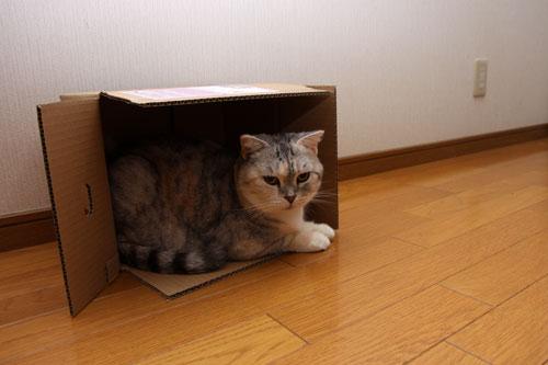 箱の有効利用_d0355333_19122795.jpg