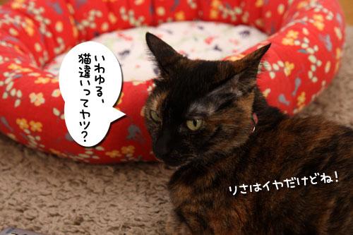 猫違い_d0355333_19253705.jpg