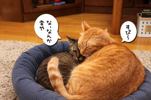 猫違い_d0355333_19253720.jpg