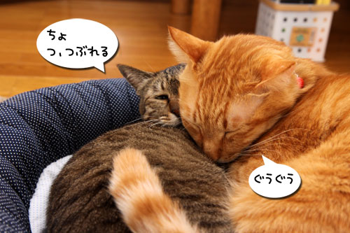 猫違い_d0355333_19253722.jpg
