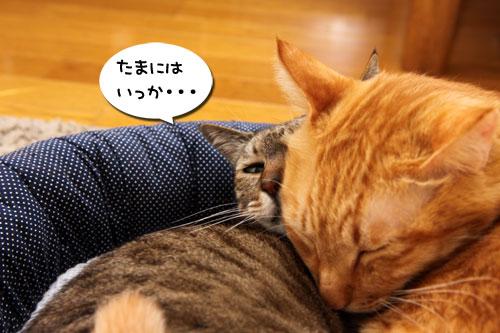 猫違い_d0355333_19253742.jpg