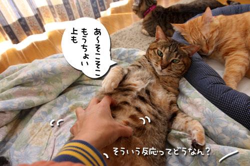 ぱつんぱつん同盟結成_d0355333_19254750.jpg