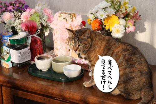 ぱつんぱつん同盟結成_d0355333_19254753.jpg