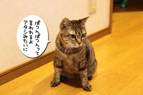 ぱつんぱつん同盟結成_d0355333_19254793.jpg
