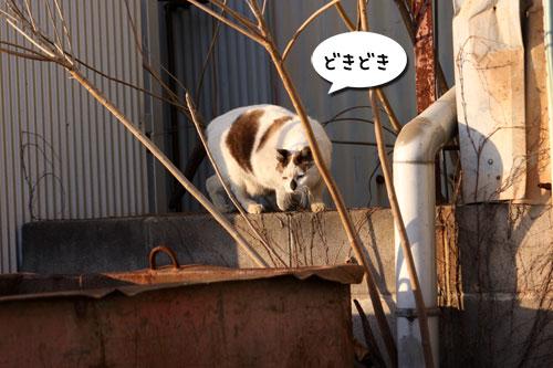 工場猫おかんの話_d0355333_19255904.jpg