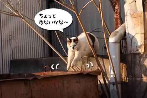 工場猫おかんの話_d0355333_19255906.jpg