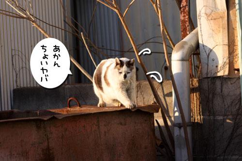 工場猫おかんの話_d0355333_19255994.jpg