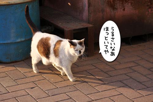 工場猫おかんの話_d0355333_19260004.jpg