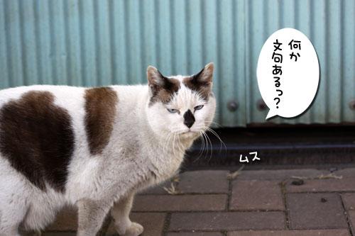 工場猫おかんの話_d0355333_19260048.jpg