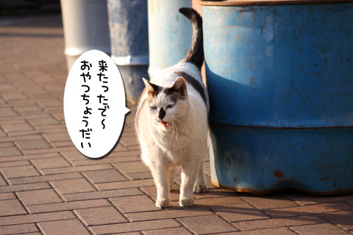 工場猫おかんの話_d0355333_19260076.jpg