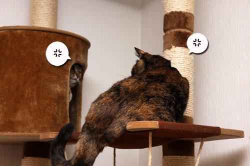 いけず猫は誰だ?_d0355333_19283092.jpg