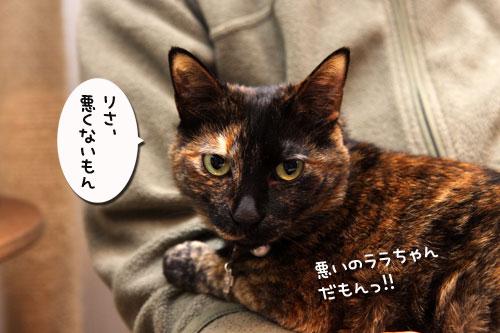 いけず猫は誰だ?_d0355333_19283123.jpg
