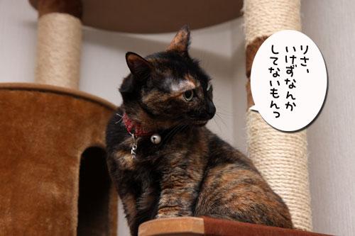いけず猫は誰だ?_d0355333_19283127.jpg