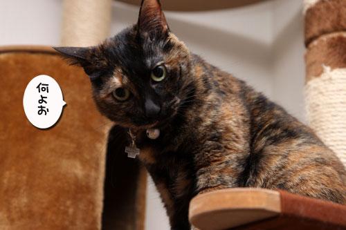いけず猫は誰だ?_d0355333_19283155.jpg