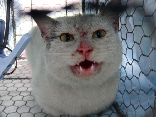 コンビニの猫_d0355333_19284641.jpg