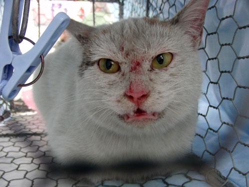 コンビニの猫_d0355333_19284643.jpg
