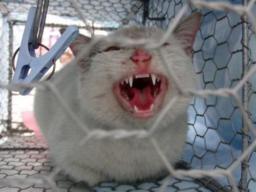 コンビニの猫_d0355333_19284702.jpg