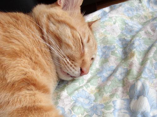 コンビニの猫_d0355333_19284740.jpg