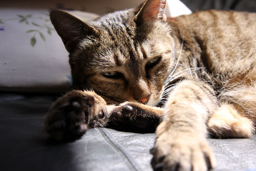 猫たちには関係のないGW_d0355333_19310320.jpg