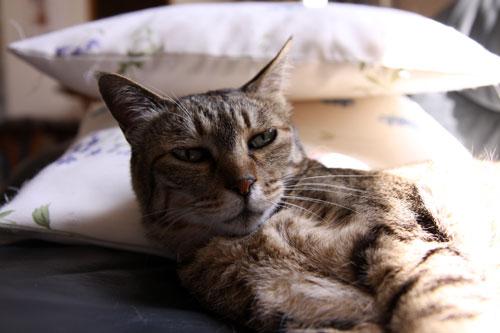 猫たちには関係のないGW_d0355333_19310372.jpg