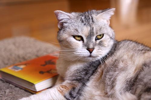 猫たちには関係のないGW_d0355333_19310432.jpg
