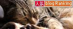 猫たちには関係のないGW_d0355333_19310583.jpg