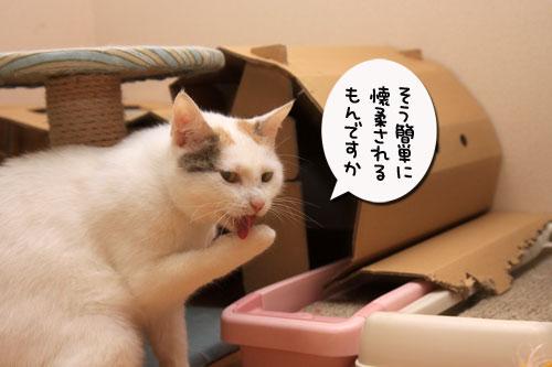 桃菜々懐柔策_d0355333_19312928.jpg