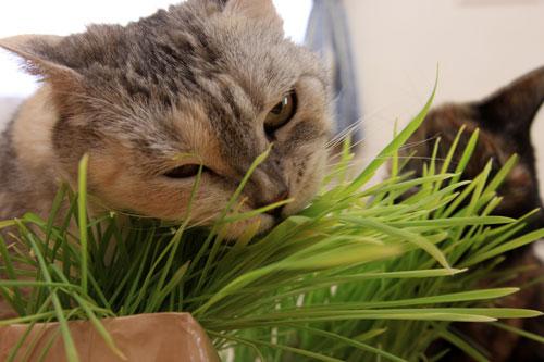 草なんか食べへん。_d0355333_19314618.jpg