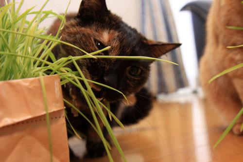 草なんか食べへん。_d0355333_19314619.jpg