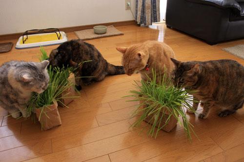 草なんか食べへん。_d0355333_19314638.jpg