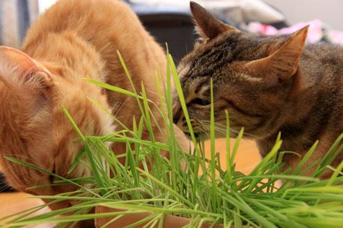 草なんか食べへん。_d0355333_19314655.jpg