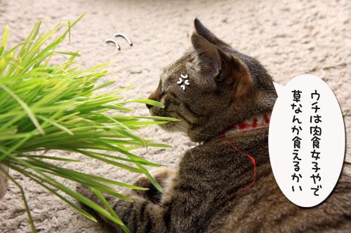 草なんか食べへん。_d0355333_19314709.jpg