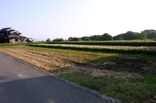 ぐれ隊長と朝の散歩_d0355333_19322775.jpg