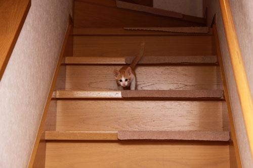 階段でどきどき_d0355333_19335121.jpg