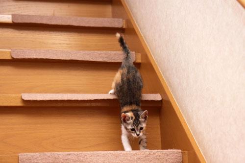 階段でどきどき_d0355333_19335177.jpg