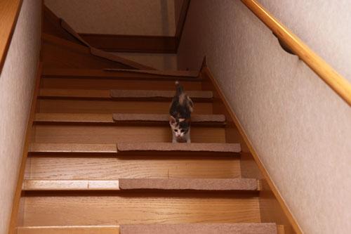 階段でどきどき_d0355333_19335241.jpg
