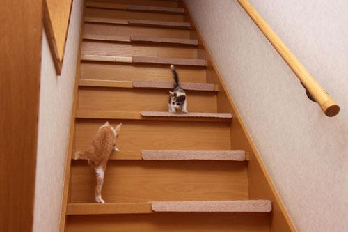 階段でどきどき_d0355333_19335313.jpg
