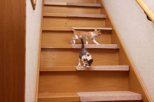 階段でどきどき_d0355333_19335347.jpg