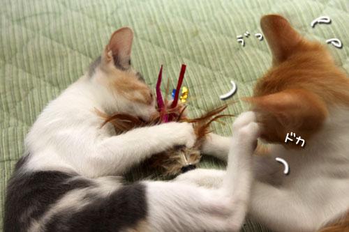 野獣系仔猫の逆襲!_d0355333_19351160.jpg