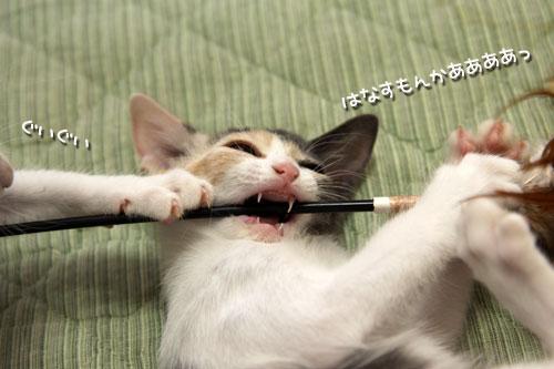 野獣系仔猫の逆襲!_d0355333_19351196.jpg