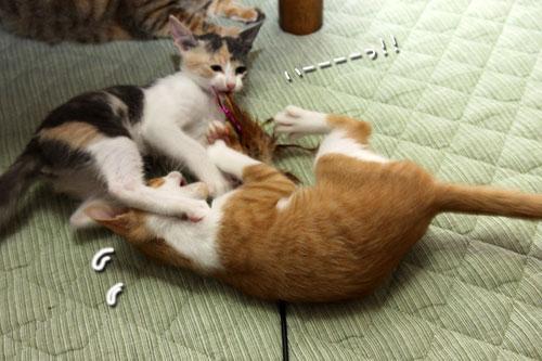 野獣系仔猫の逆襲!_d0355333_19351269.jpg