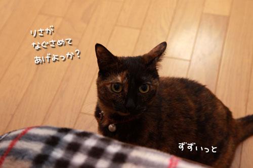 気遣いしすぎの猫_d0355333_19354909.jpg