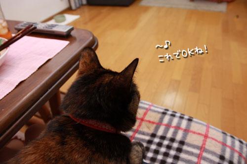 気遣いしすぎの猫_d0355333_19354927.jpg