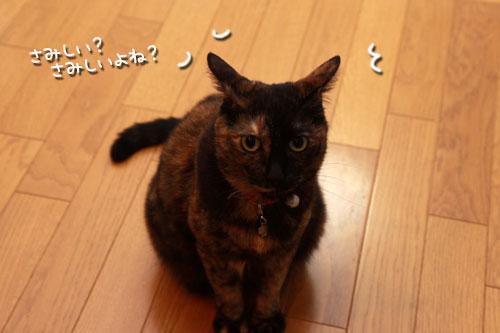 気遣いしすぎの猫_d0355333_19354961.jpg