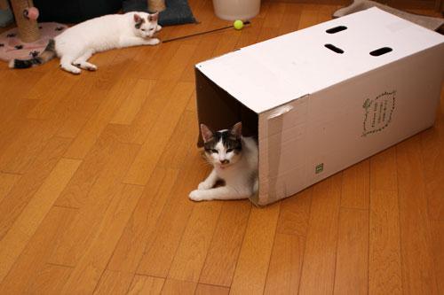 箱の使い道_d0355333_19372591.jpg