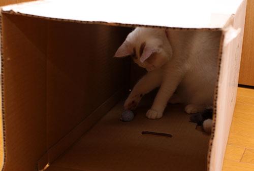 箱の使い道_d0355333_19372646.jpg