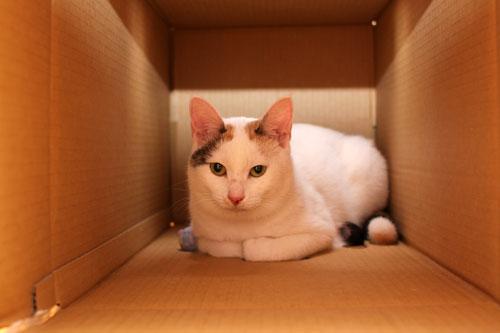 箱の使い道_d0355333_19372661.jpg