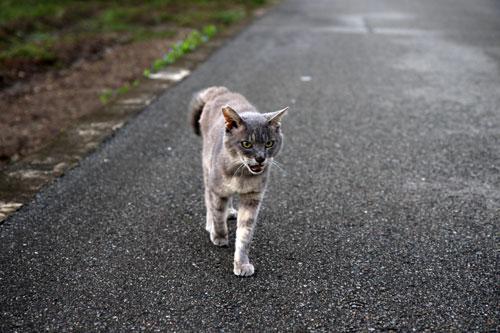 猫助けは人助け。_d0355333_19395132.jpg